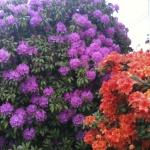 Butchart gardens, Sidney, Saanich Peninsular, Victoria.